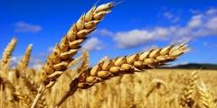 cereales-maroc.jpeg