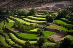 terres-agricoles-maroc.jpg