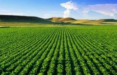 agriculture-marocaine.jpg