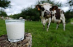 producteurs-lait-maroc.jpg